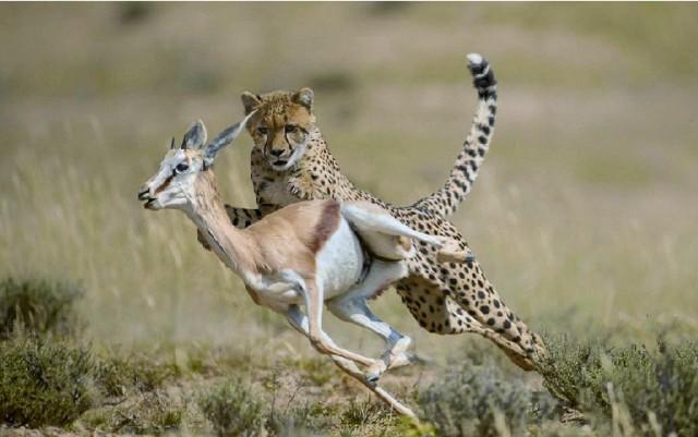 自然界の野生動物には病気という概念はない