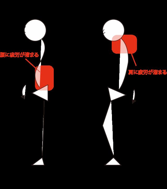 骨盤の形状